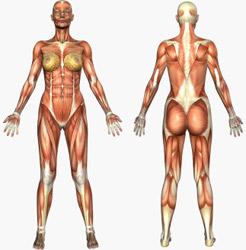 Muskeln Frau