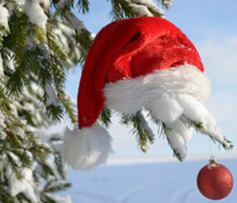 Weihnachtsbaum Selber Fällen.Weihnachtsbaum Selber Schlagen Hier Wird Euch Geholfen