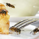 Wespen schnell vertreiben