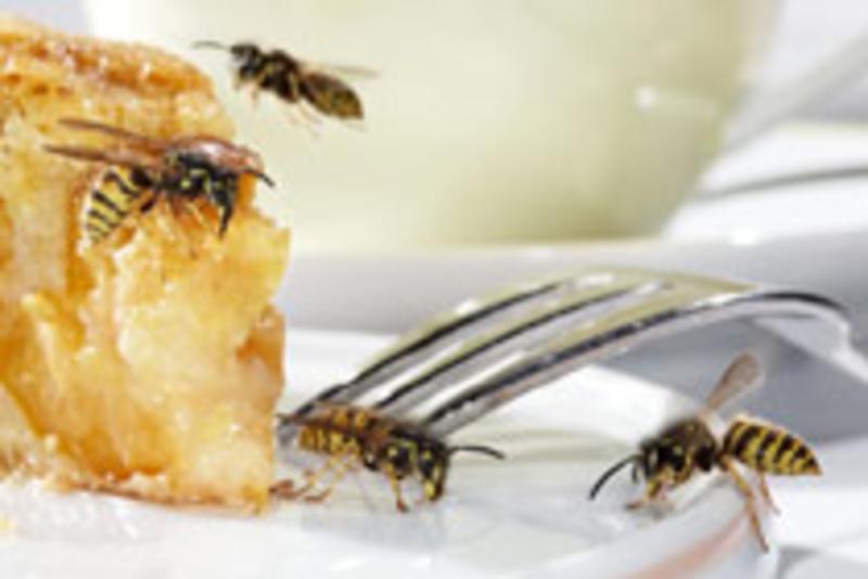 Wespen Vertreiben So Wird Man Die Plagegeister Los