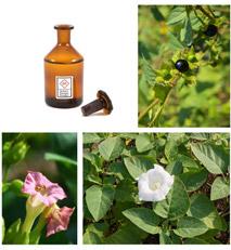 Giftige Pflanzen