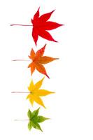 Farben Herbsttyp